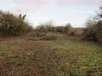 Orchard Site Clearance