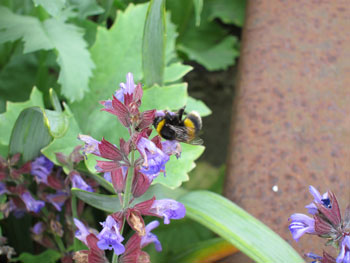 Bumble Bee in Oswestry Station